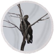 Baby Bald Eagle Round Beach Towel