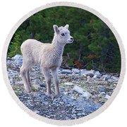Baby Big Horn Sheep Round Beach Towel