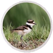 Baby - Bird - Killdeer Round Beach Towel
