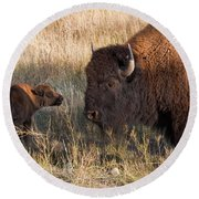Baby Bison Meets Daddy Round Beach Towel