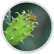 Baby Cactus - Macro Photography By Sharon Cummings Round Beach Towel