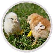 Baby Chicks Round Beach Towel