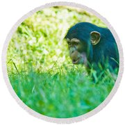 Baby Chimp In The Grass Round Beach Towel
