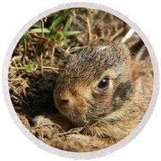 Baby Eastern Cottontail Round Beach Towel