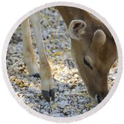 Baby Deer Round Beach Towel