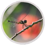 Baby Dragonfly Round Beach Towel