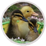 Baby Ducks Round Beach Towel