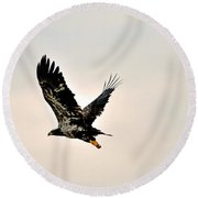 Baby Eagle Flying By  Round Beach Towel