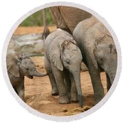 Baby Elephant Trio Round Beach Towel