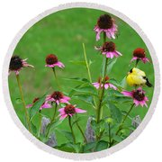 Baby Finch Round Beach Towel
