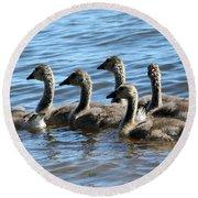 Baby Geese Round Beach Towel