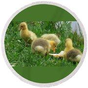 Baby Geese-mayer Lake-savannah Round Beach Towel