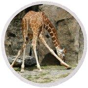 Baby Giraffe 1 Round Beach Towel