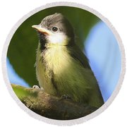 Baby Coal Tit Round Beach Towel
