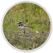 Baby Killdeer Round Beach Towel