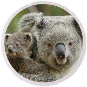Baby Koala With Mom Round Beach Towel