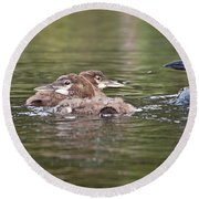 Baby Loons And Mom Round Beach Towel