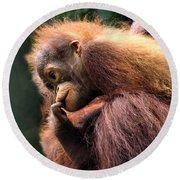 Baby Orangutan Borneo Round Beach Towel