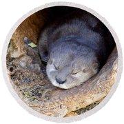 Baby Otter Round Beach Towel