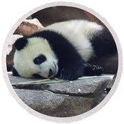Baby Panda Round Beach Towel