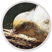 Baby Quail In Pastel Round Beach Towel