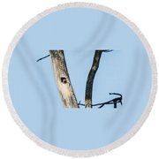 Baby Red-headed Woodpecker Round Beach Towel