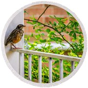 Baby Robin - Such A Big World Round Beach Towel