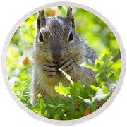 Baby Rock Squirrel  Round Beach Towel