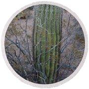 Baby Saguaro Cactus Round Beach Towel