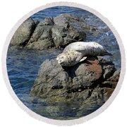 Baby Sea Lion On Rock At San Juan Island Round Beach Towel
