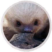 Baby Sloth 2 Round Beach Towel by Heiko Koehrer-Wagner