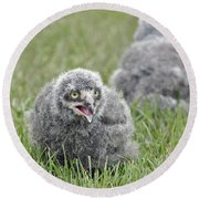 Baby Snowy Owls Round Beach Towel
