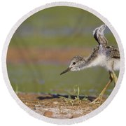Baby Stilt Stretching Its Wings Round Beach Towel