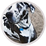 Bacchus The Great Dane Round Beach Towel