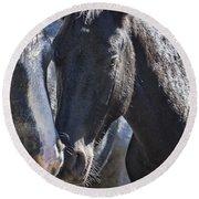 Bachelor Stallions - Pryor Mustangs Round Beach Towel
