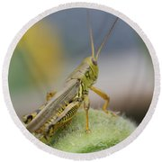 Back Side View Of Green Grasshopper....   # Round Beach Towel