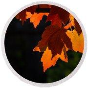 Backlit Autumn Maple Leaves Round Beach Towel