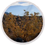 Backlit Desert Foliage Round Beach Towel