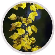 Backlit Leaves Of Autumn Round Beach Towel