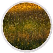 Backlit Meadow Grasses Round Beach Towel