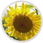 Backlit Sunflower Round Beach Towel