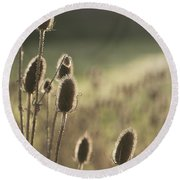 Backlit Teasel Round Beach Towel