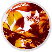 Backlit Tree Leaves 2 Round Beach Towel