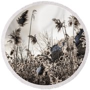Backlit Winter Reeds Round Beach Towel