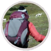 Backpacker Watches Dall Sheep Round Beach Towel