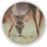 Backyard Beauty Round Beach Towel