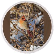 Backyard Birds Female Nothern Cardinal Round Beach Towel