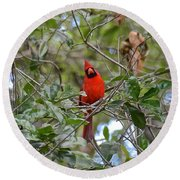 Backyard Cardinal In Tree Round Beach Towel