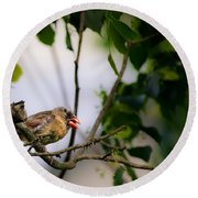 Bad Hair Day-female Northern Cardinal Round Beach Towel
