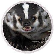 Badger-animal-image Round Beach Towel